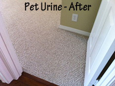 Pet Stain Removal - After