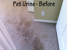 Pet Stain Removal - Before